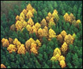 Larches